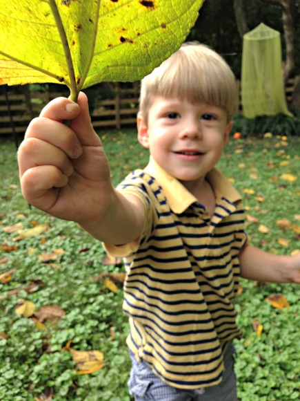 A Nature Walk for Fall - Can you find a leaf the size of your face?