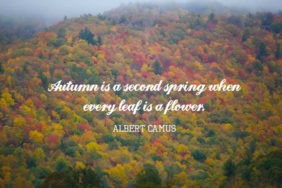 "A Nature Walk for Fall - ""Autumn is a second spring when every leaf is a flower."" - Albert Camus"