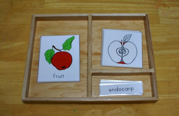 Montessori Apple Themed Activities - Parts of Fruit Three-Part Cards